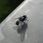 Insekten (1)