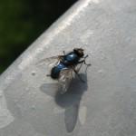 Insekten (2)