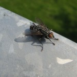 Insekten (3)