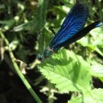 Insekten (4)