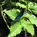 Insekten (5)