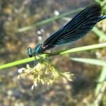 Insekten (7)